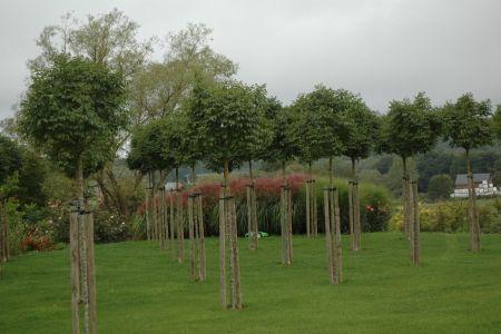 Jardin paysage à Ambly (Nassogne) (12).JPG